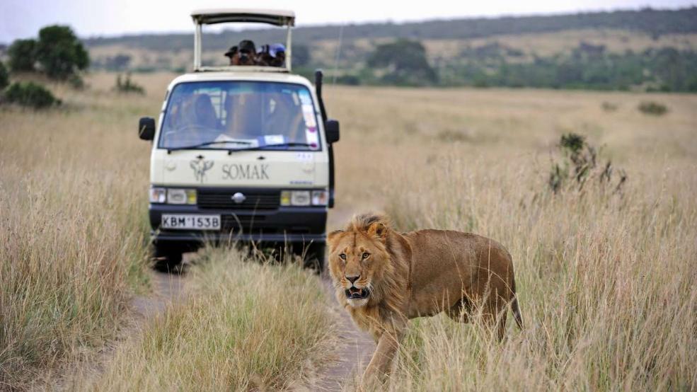 South African Safari Park
