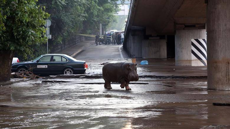 Panorama flood in Tbilisi : Dangerous animals escaped from Zoo – Several dead